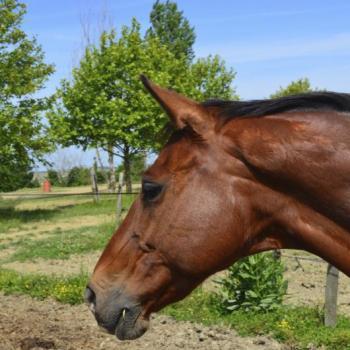 Ecole d'équitation Quint Fonsegrives